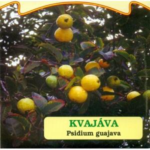 Kvajáva
