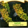 Sapan žlutý květ