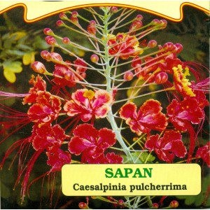 Sapan žlutočervený květ