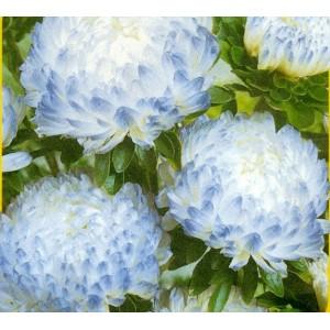 Duchesse silvery blue