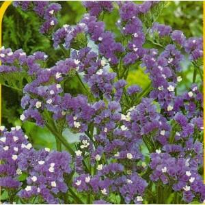 Safír - fialová