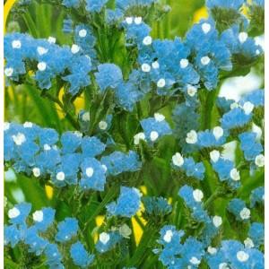 Ametyst - modrá