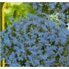 Křišťálový palác - modrá