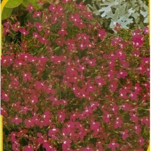 Cascade - červená