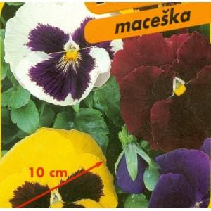 Maceška - XXL F1 - série MAXI