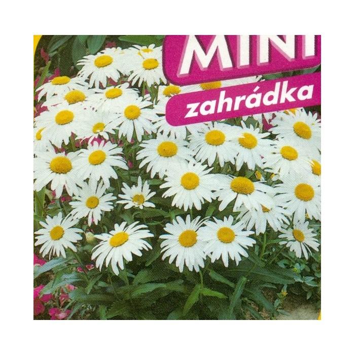 Kopretina - Silver Princes - směs Mini