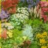 Směs květin pro skalky