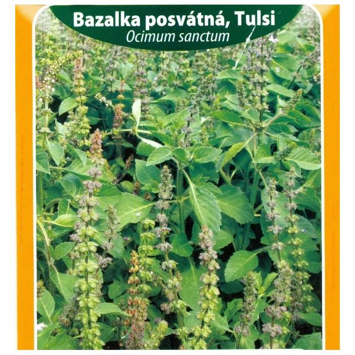 Bazalka posvátná, Tulsi / letnička