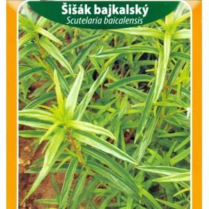 Šišák bajkalský / trvalka