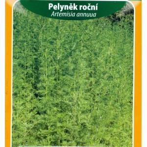 Pelyněk roční / Artemisia annuua