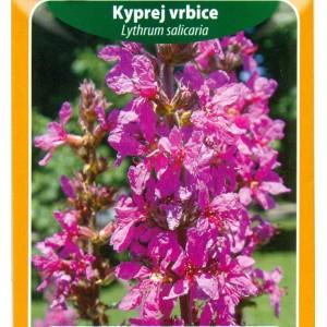 Kyprej