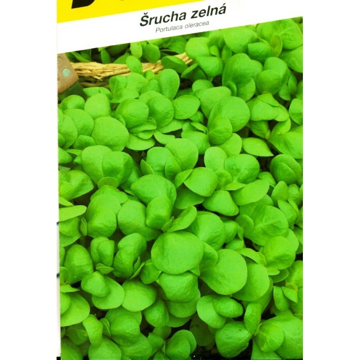 Šrucha, Green purslane