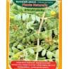 Kotvičník zemní / Planta Naturalis
