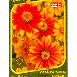 Ostálka Zahara Sunburst