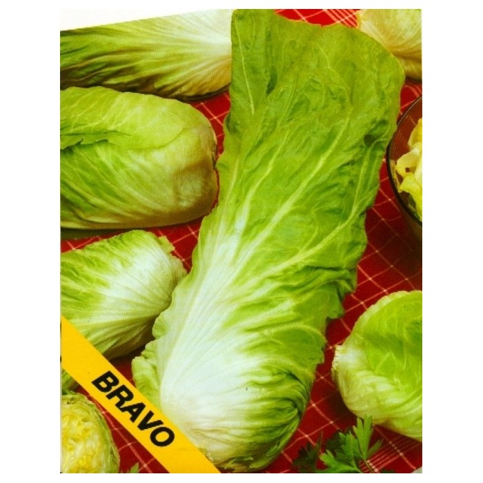 Čekanka salátová, Bravo