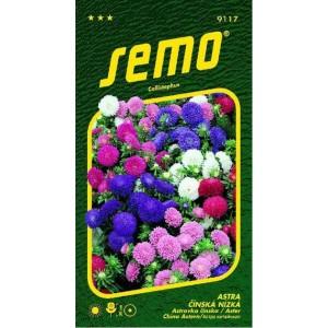 Colour carpet, Chrysantémokvětá