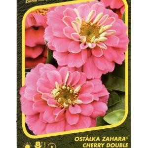 Ostálka Zahara Cherry Double