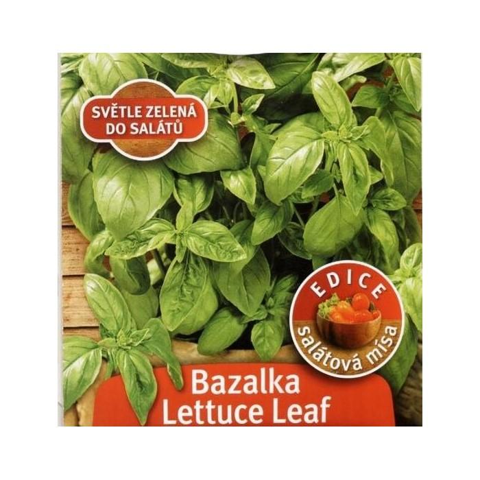 Bazalka Lettuce Leaf, rosteto