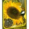 Slunečnice Pro ptáčky