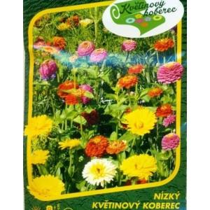 Nízký květinový koberec
