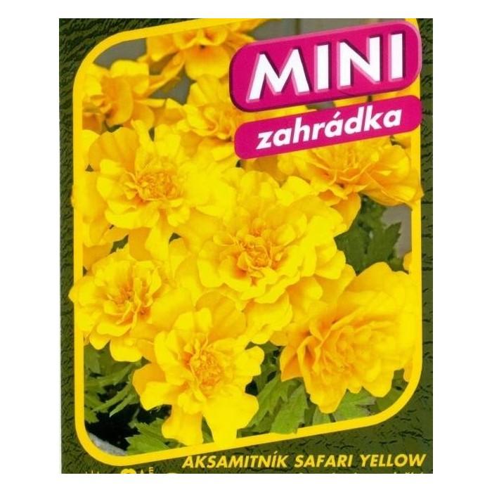 Aksamitník Safari Yellow